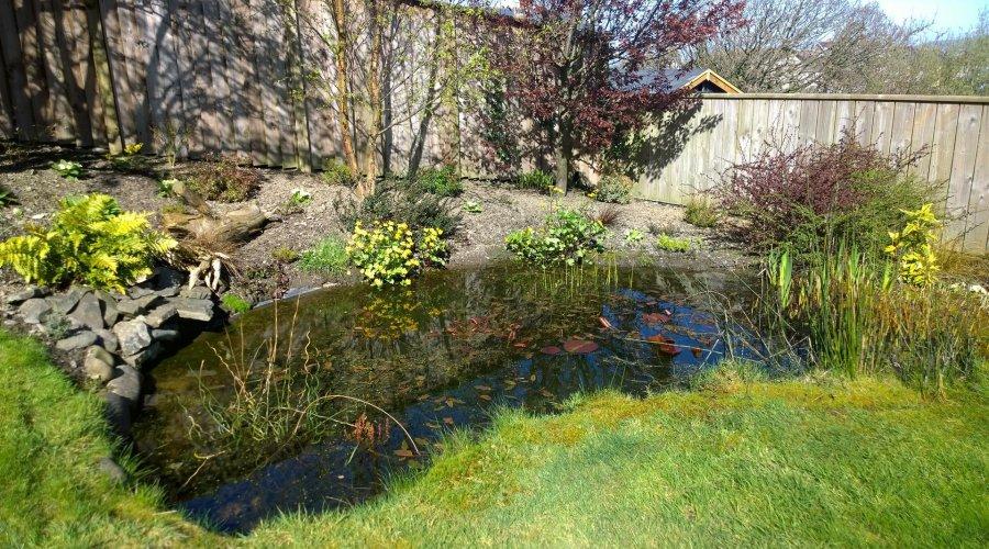 Llwyn, Borth - pond.jpg