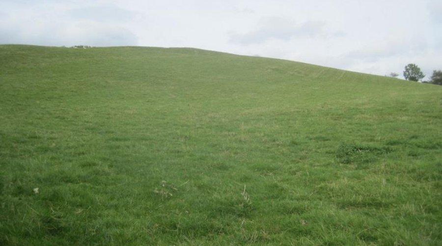 Bwadrain field.jpg