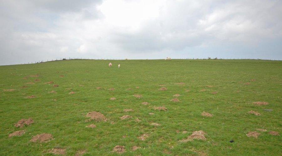 Pantycyfyng Uchaf - land 1.jpg