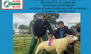 7th Multi Breed Ram Sale