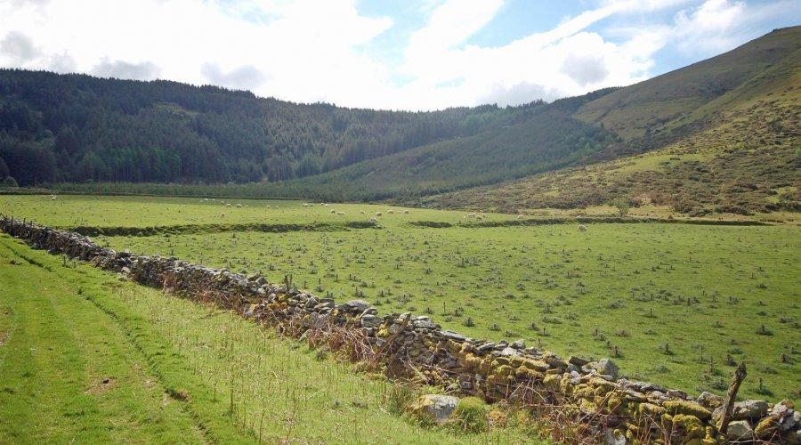 Llawr y cwm bach - land 5.jpg