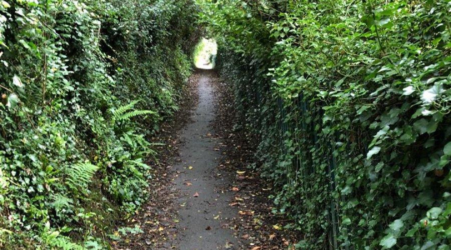 Trewin, 36 Brynglas Rd - path.jpg