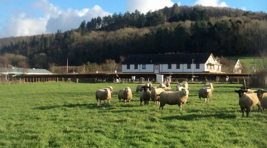 Special Entry of In Lamb ewes for the 3rd Feb Sheep sale