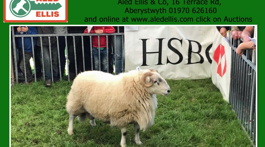 6th Multi Breed Ram Sale