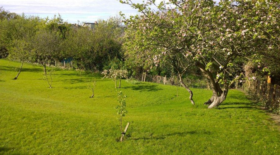 llwyn, Borth - garden trees.jpg